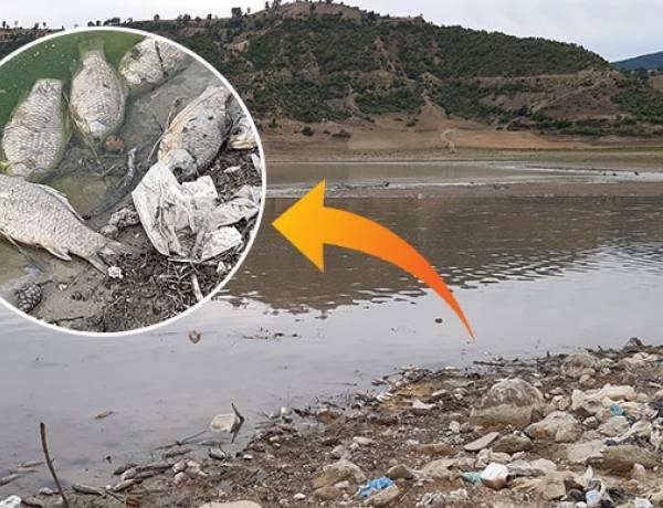 Altınkaya Baraj Gölünde Toplu Balık Ölümü!