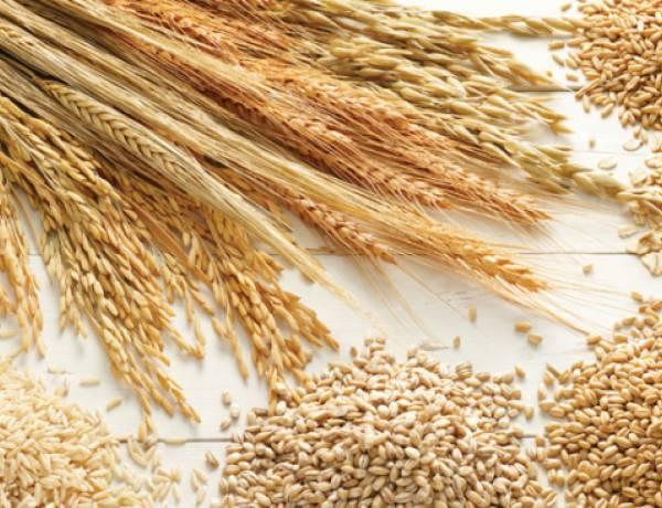 Çiftiçilere 4,5 Milyon TL Ödeme Yapılıyor