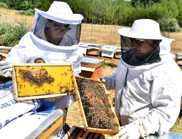 Arıcılar, Kimyasallara Karşı Uyarıldı